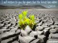 Joel 2 25 I will restore what the locust has eaten