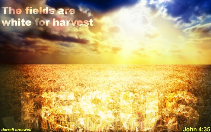fields-white-for-harvest-john-4-35-jesus-bible-verse