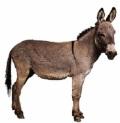 Jesus donkey