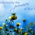 salm Comfort promises God